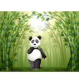 cartoon panda bamboo forest vector image