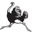ostrich black white vector image