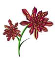 Bright Aeonium Tree Flower vector image vector image