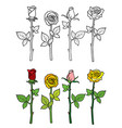 hand drawn rose coloring page vector image