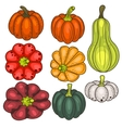 Set of pumpkin vegetable clip art vector image