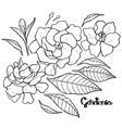 Graphic gardenia set vector image