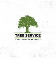 professional arborist tree care service organic vector image