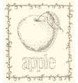 Apple and Leaves vector image