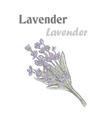 Lavender Color drawing lavender 10EPS Lavender vector image