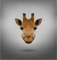 abstract triangle polygonal giraffe vector image vector image