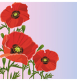 Background with flower red poppy vector image vector image
