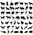 50 animal vector image