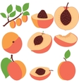 Peach Set peaches pieces and slices vector image