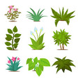 colorful house plants isolated on white background vector image