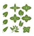 Mint leaves set vector image
