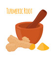 turmeric root pestle mortar flat style vector image