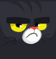 cartoon black witch cat face vector image
