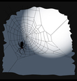 Halloween background Spider on a cobweb vector image vector image