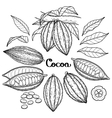 Graphic cocoa fruit vector image