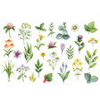 hand drawn watercolor set of herbs and vector image