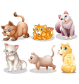 Playful cats vector image