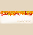 panorama fall autumn colorful leaves background vector image