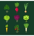 Fresh Vegetable Plants With Roots Set vector image