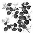 Mitchelle rampant vintage engraving vector image