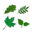 Summer oak maple ash birch leaves vector image