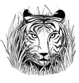 Black and white sketch of a tigers face vector image