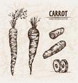 digital detailed line art carrot vector image
