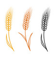 colorful isolated wheat ears set vector image