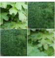 Green leaves texture Collection of abstract vector image