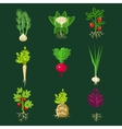 Fresh Vegetable Plants With Roots Collection vector image
