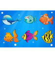 Different kinds of fishes under the ocean vector image