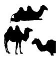 Three silhouettes of camels vector image