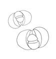 pleiospilos bolusii lithops succulent liner vector image