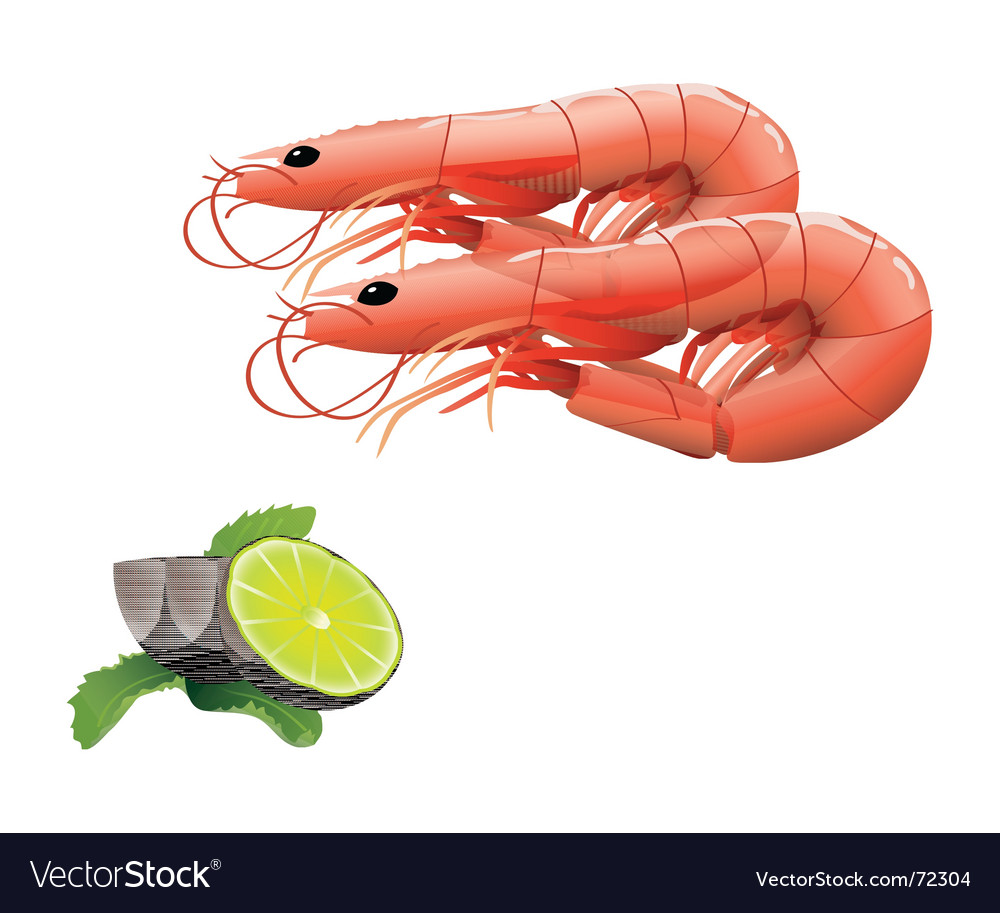 Shrimps vector