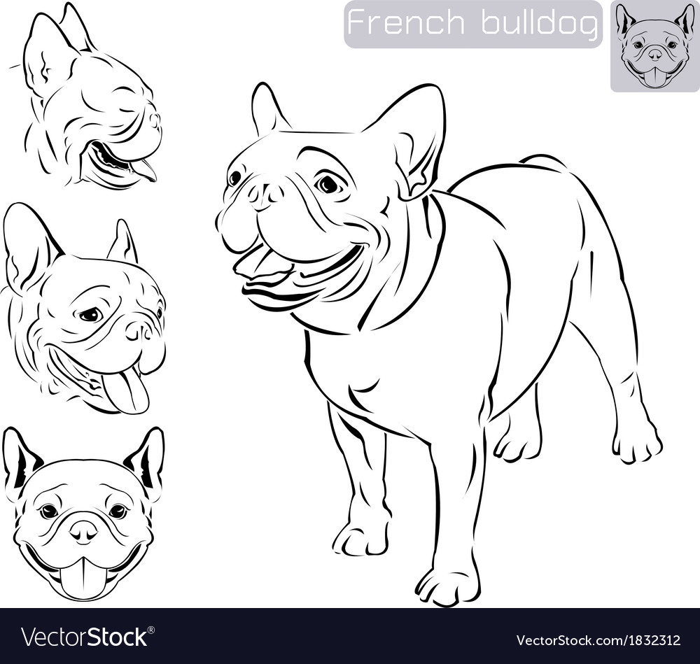 Line art french bulldog vector