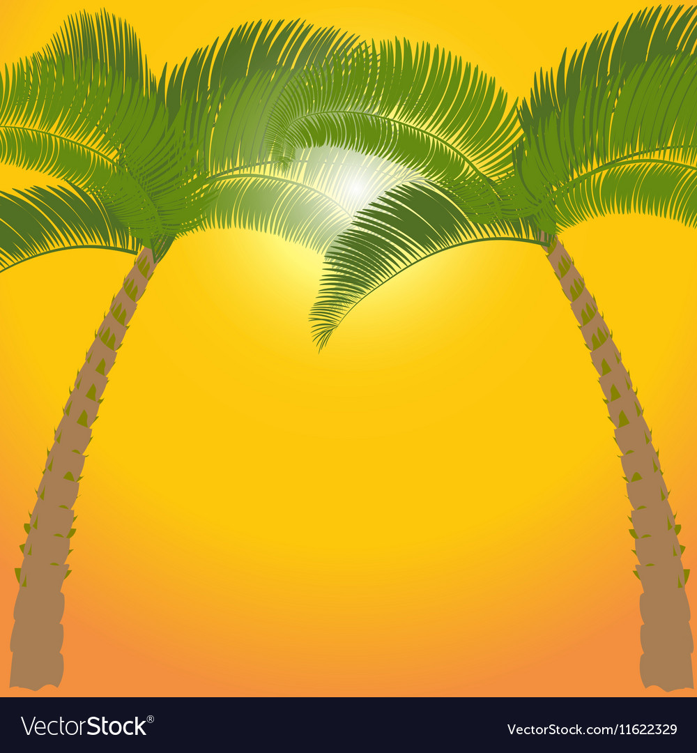 Two palm tree on orange background vector
