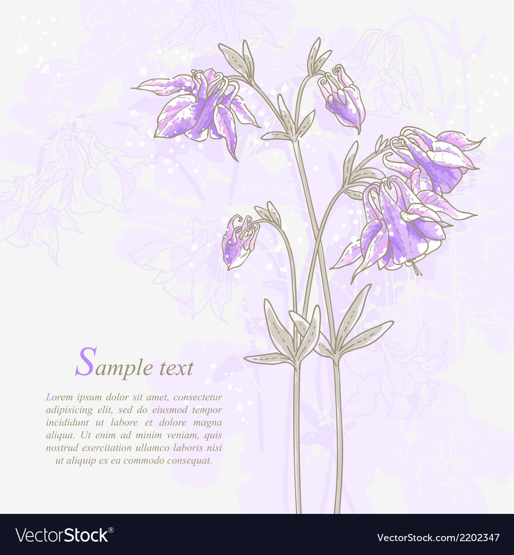 Romantic background with violet aquilegia vector