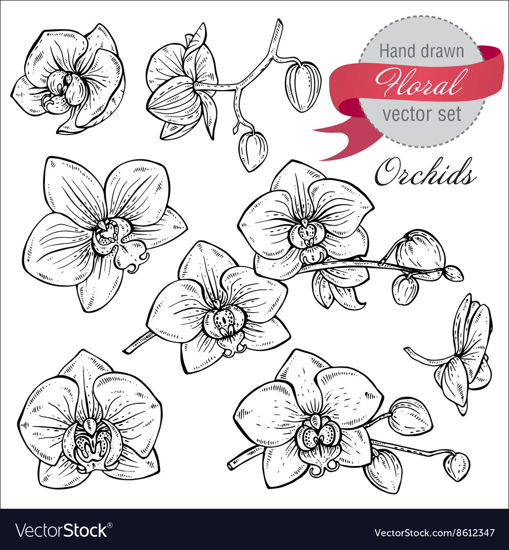 Set of hand drawn orchid branches with flowers vector