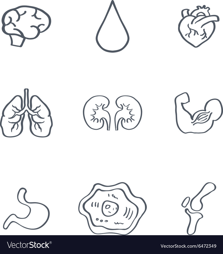 Human organs medical icons vector