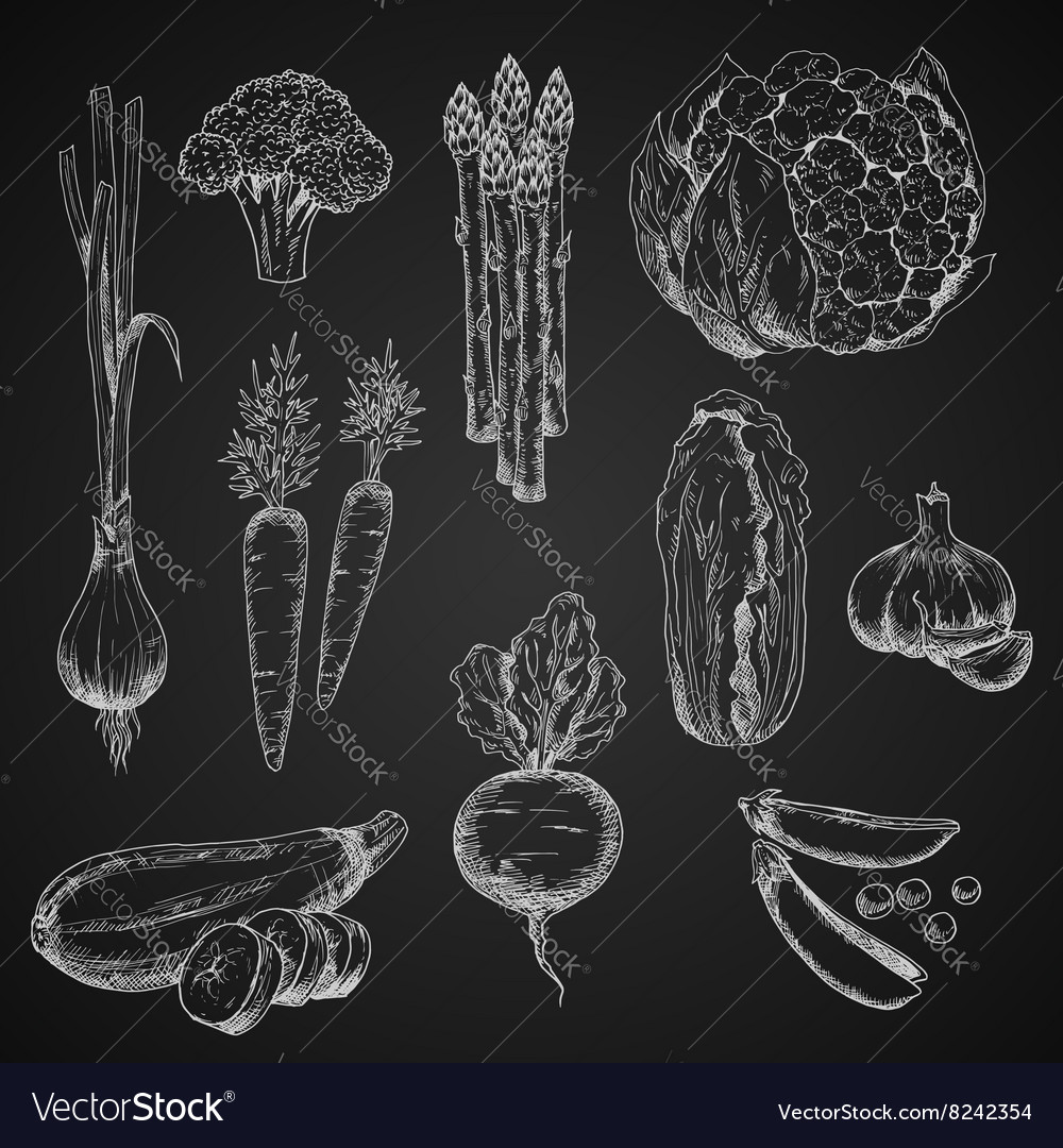 Chalck sketches of vegetables on chalkboard vector