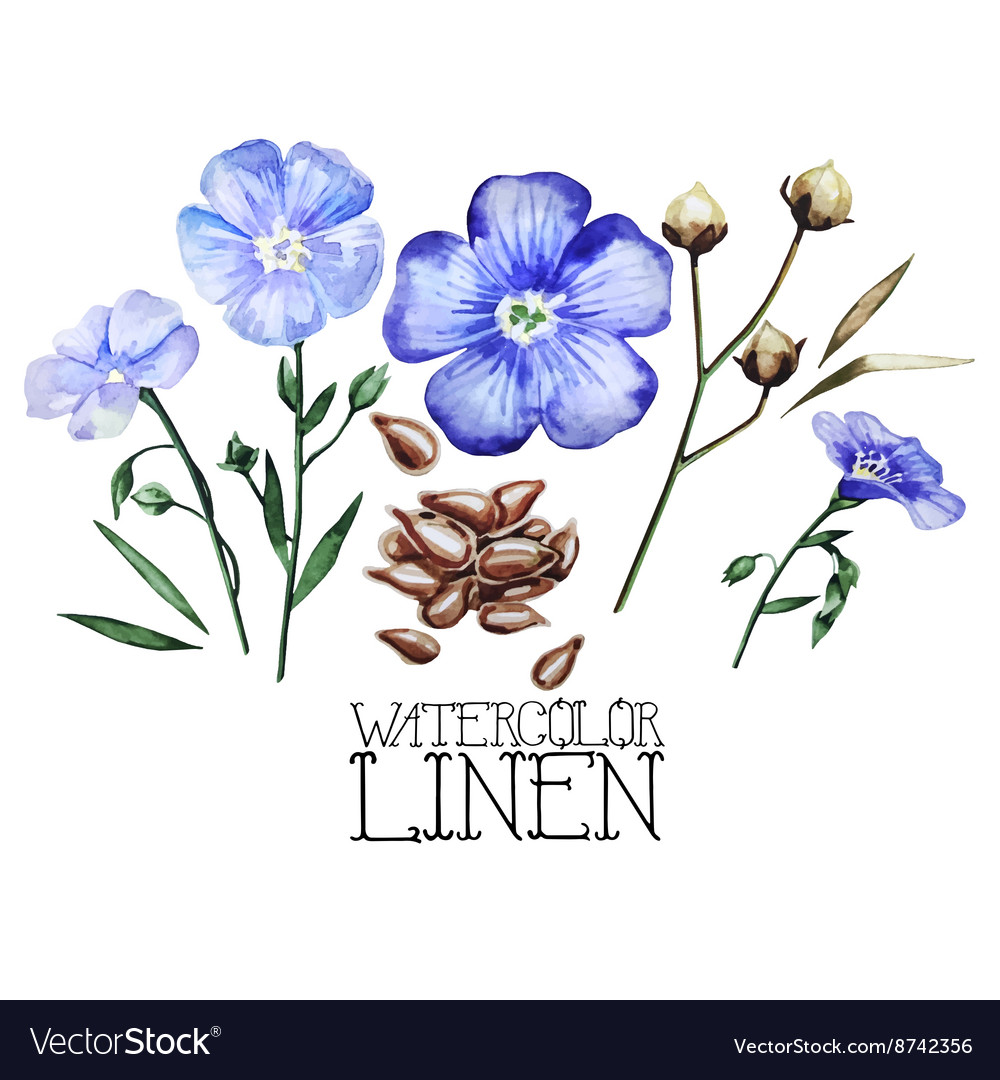 Watercolor linen set vector