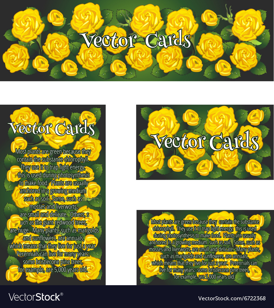 Set of four cards with the image of yellow roses vector
