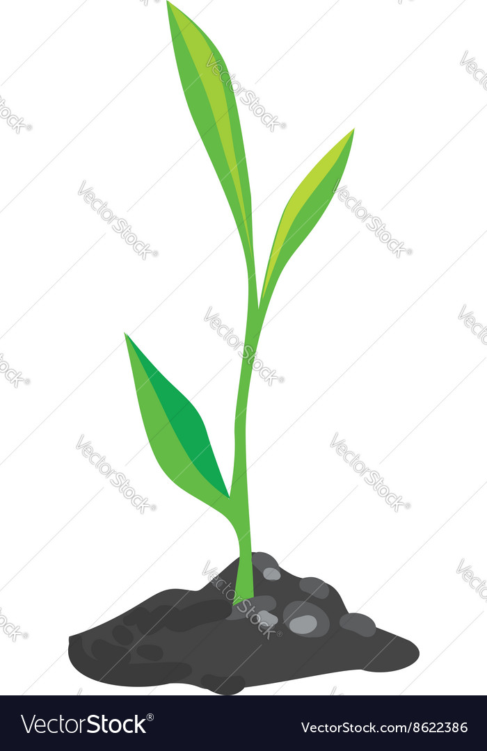 Growing green sprout vector