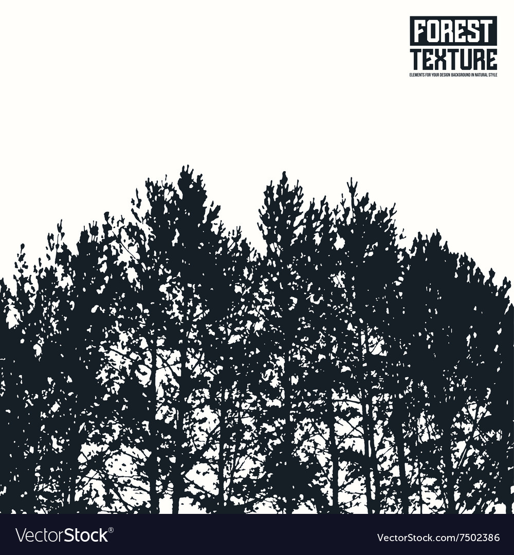 Pine forest texture vector