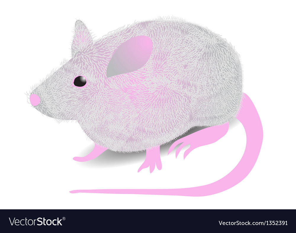 Gray mouse vector