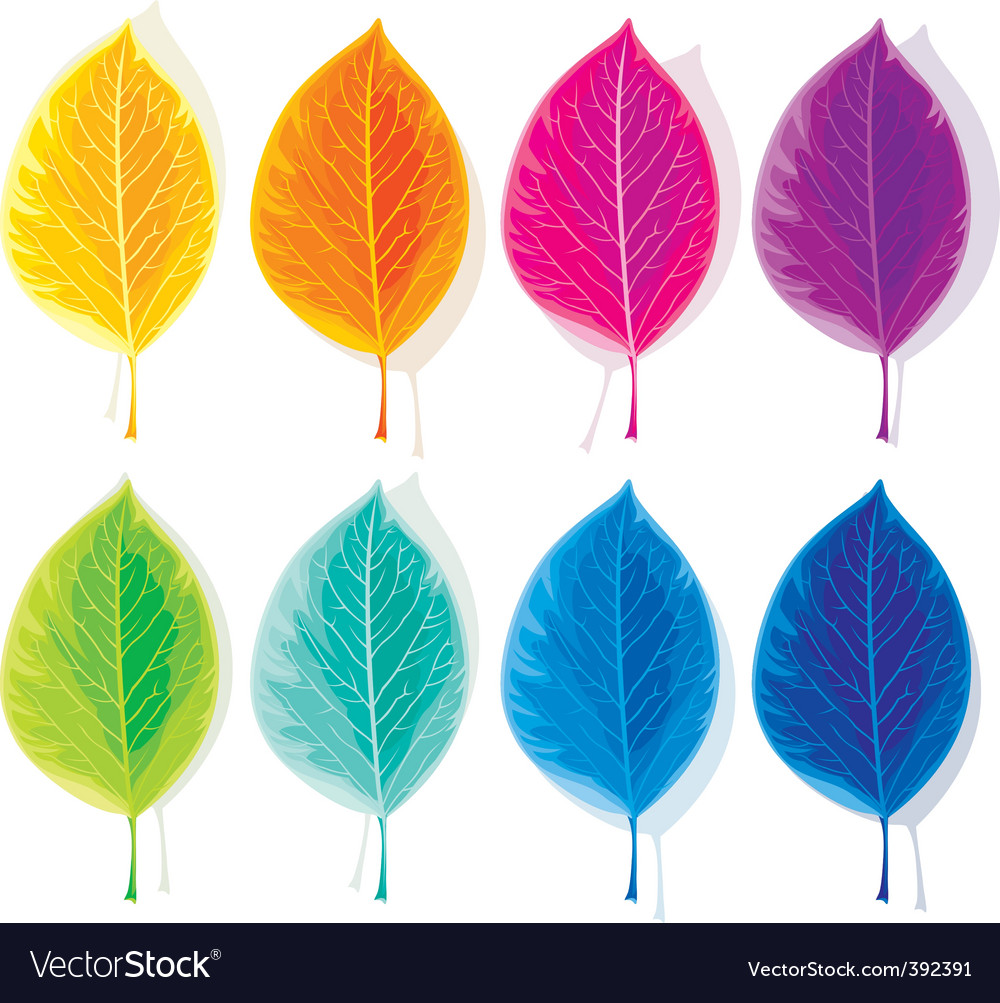 Set of colored leaves vector