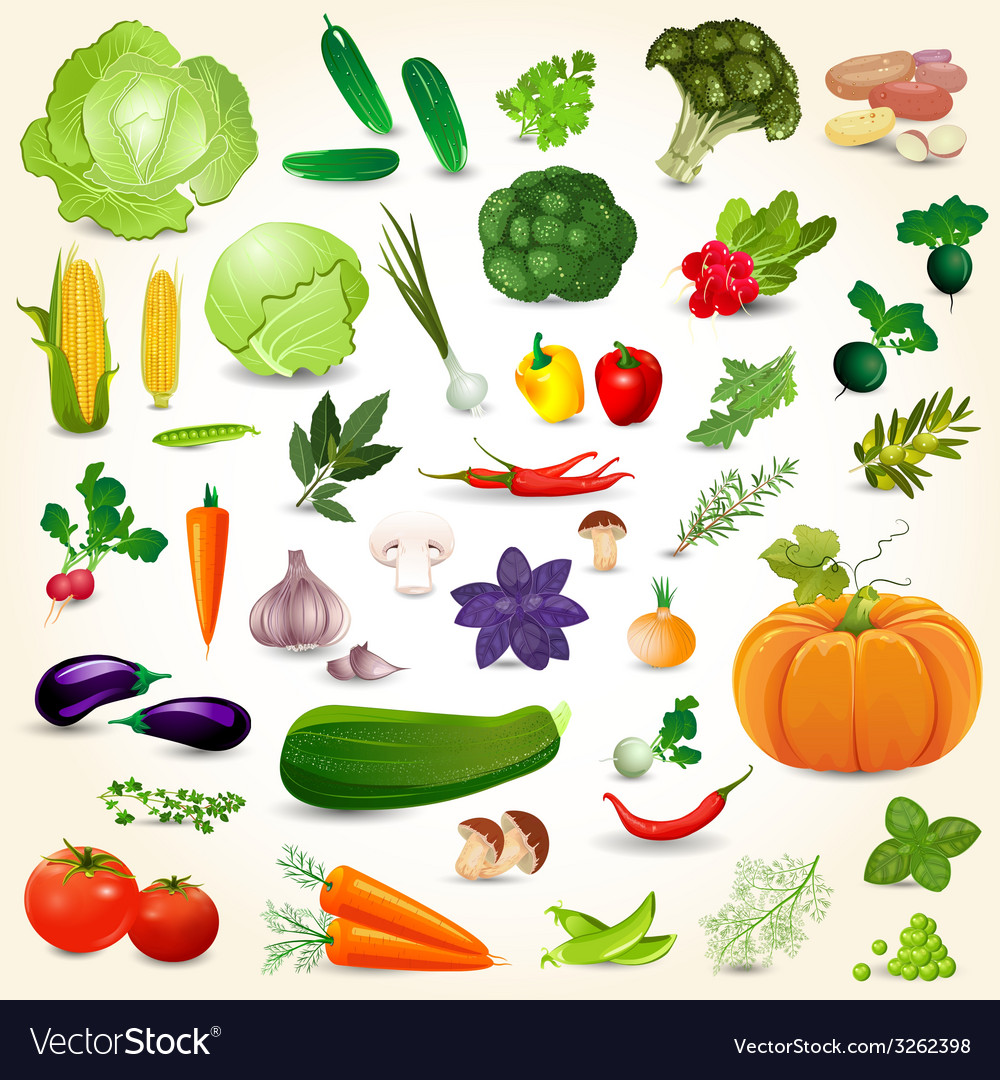 Collection of isolated ripe vegetables herbs and vector