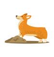 happy cute corgi dog icon vector image
