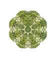 green mandala with outline circle shape on white vector image