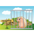 Cartoon Zoo Hedgehog vector image vector image